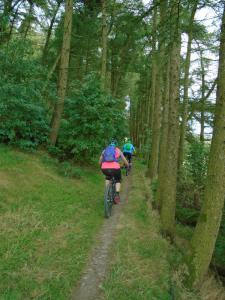 Jeanette riding the singletrack through the trees on Moel Eithinen.
