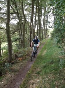 Marc on the singletrack through Moel Eithinen Woods in the Clwydian Range.
