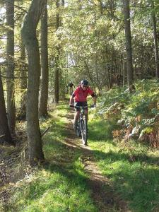 Tim on the woods singletrack below Moel Eithinen.